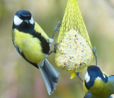 vogelfutter2